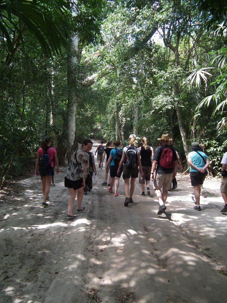 Our group walking on dirt paths through the dense jungle at Tikal