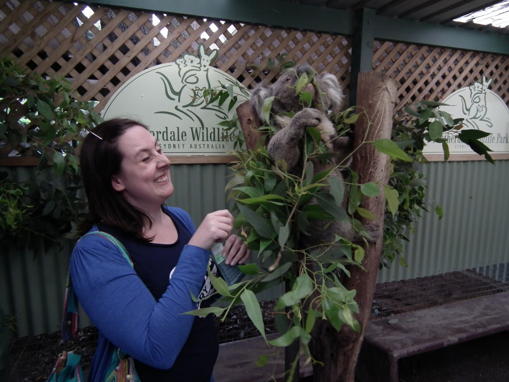 Don't try to touch the eucalyptus! Koalas are junkies!