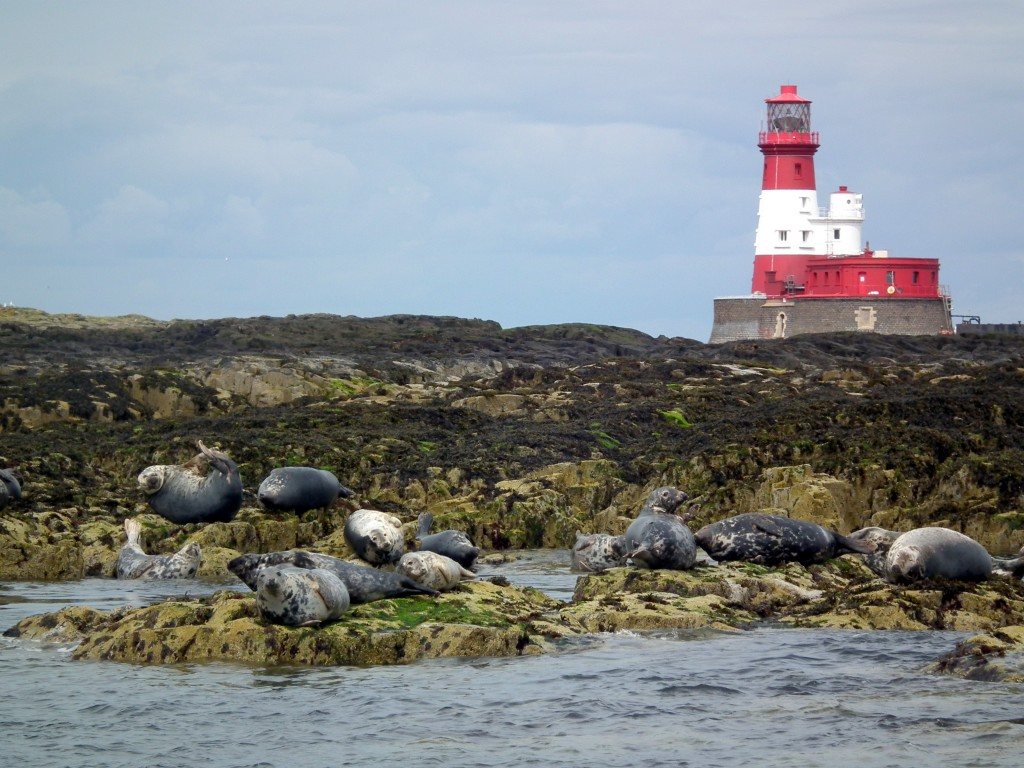 Lighthouseseals