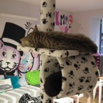Mog on the Tyne – Newcastle's Cat Cafe