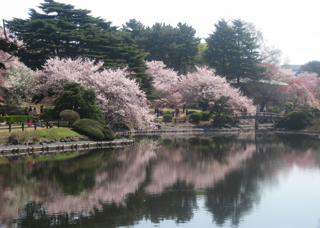 Spring destination Japan