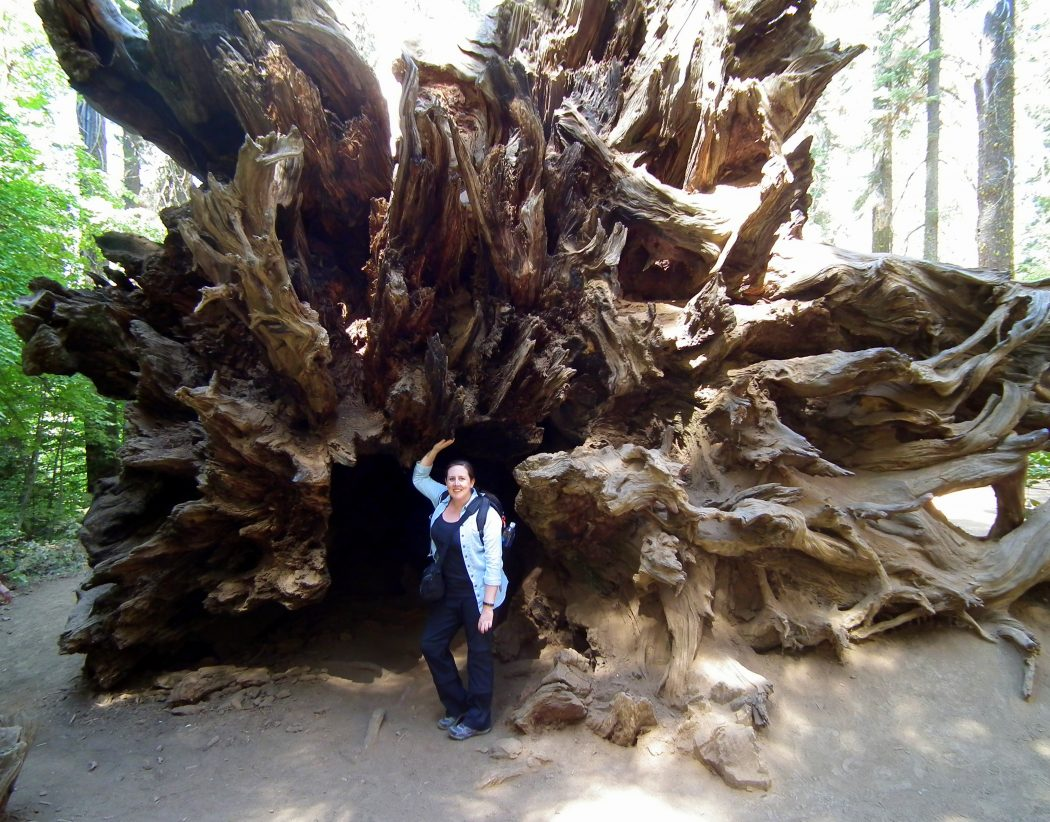 Yosemite, Giant Sequoia, USA